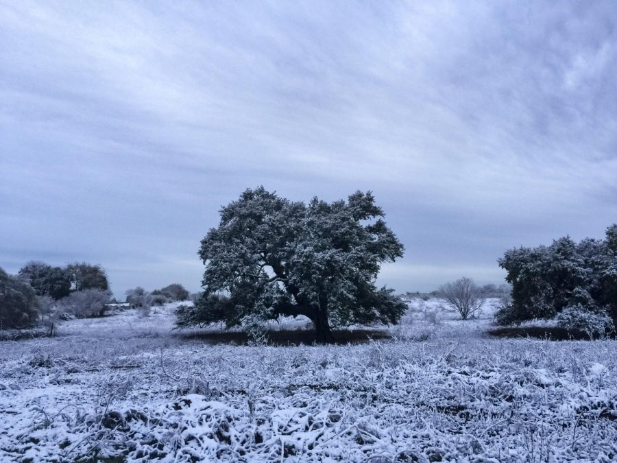 South-Central Texas' first major snow in years.