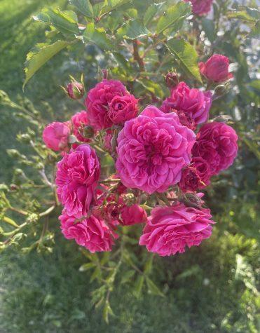 Summer in Full Bloom